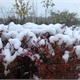 2015深秋的雪