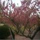 红花配绿叶