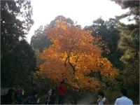 秋之韵韵之美