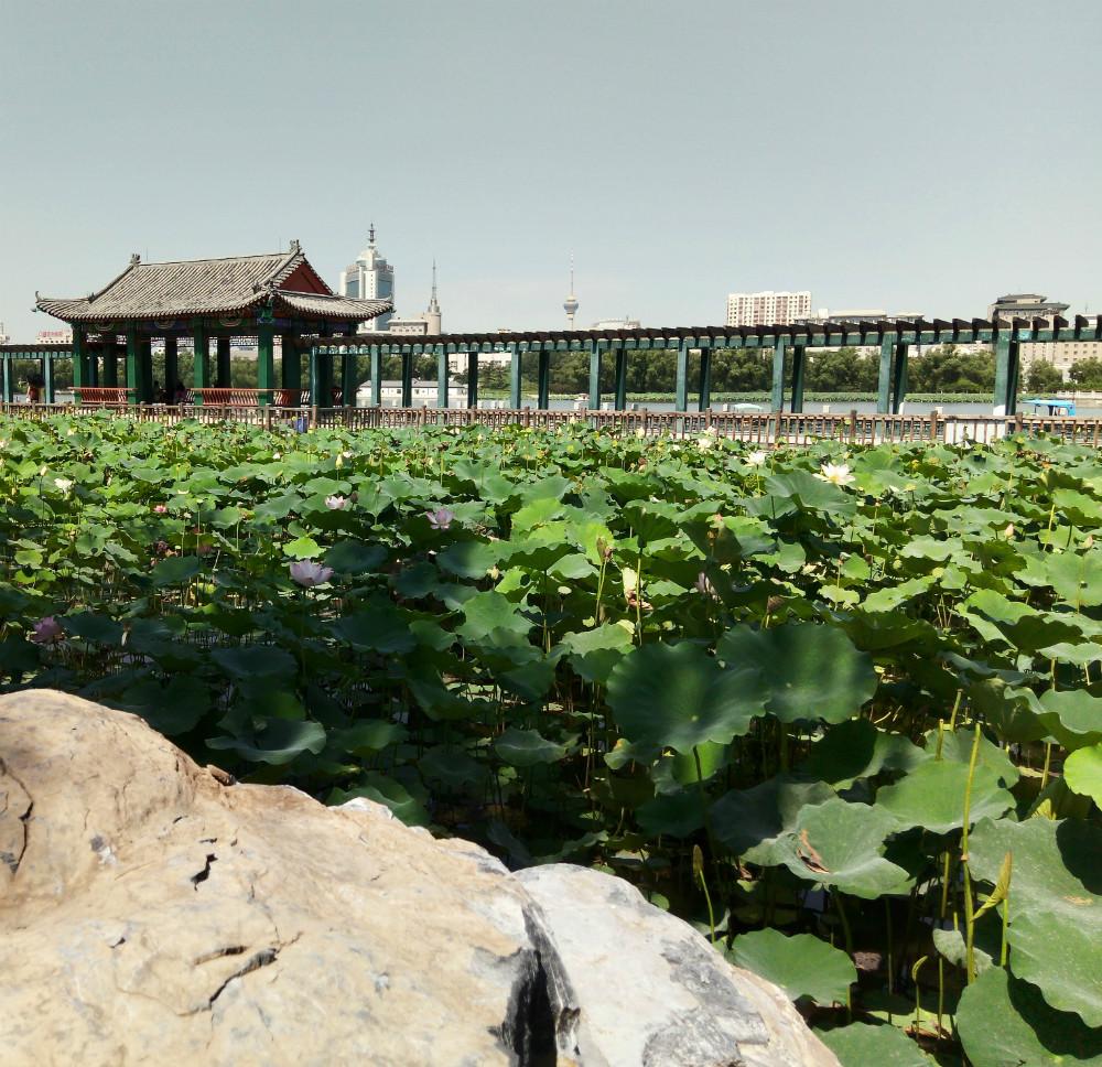 北京莲花池公园旅游攻略图片