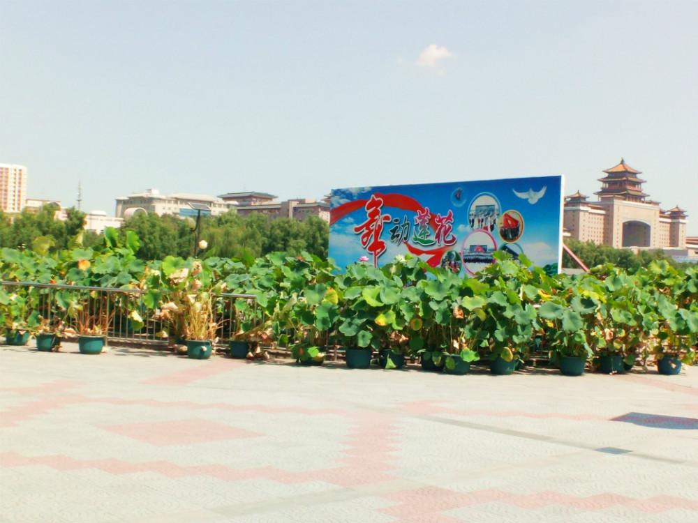 北京莲花池公园景点图片